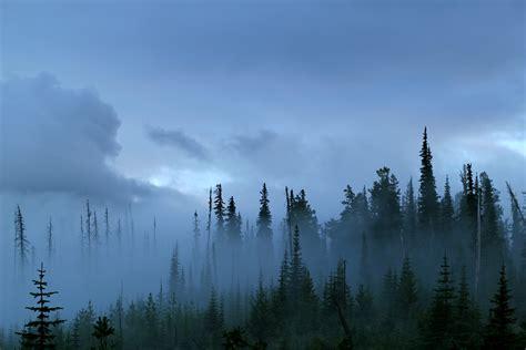 Misty Mountain Top   blue mountain thyme