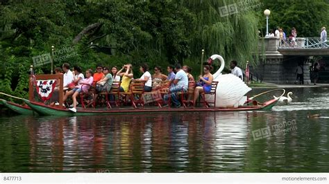 swan boats boston public garden tourists and visitors ride swan boats at boston public