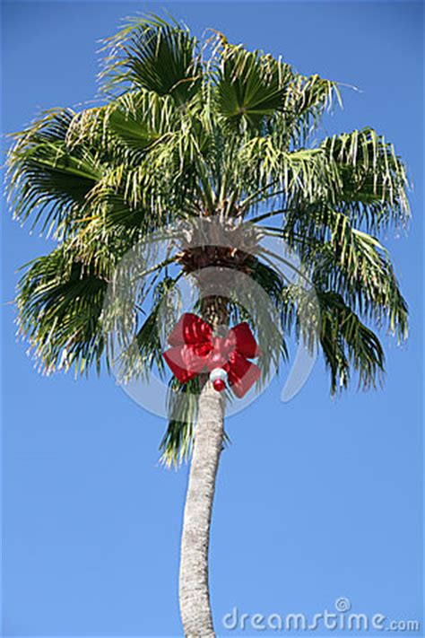 images of palm trees decorated for christmas palm tree stock photo image 47009223