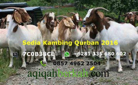 Shalat Nikmat Tanpa Cacat harga kambing qurban 2016