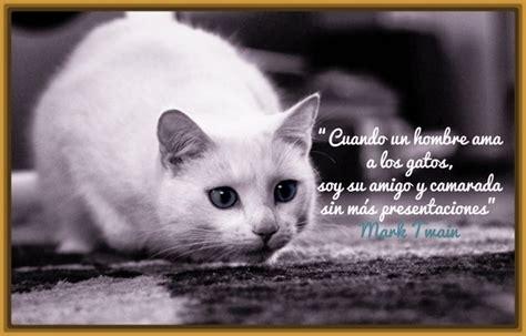 imagenes geniales de gatos imagenes de amor con frases de gatos archivos gatitos