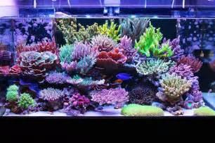 Best Plants For Tropical Aquarium - nice japanese sps reef tank video reef builders the reef and marine aquarium blog