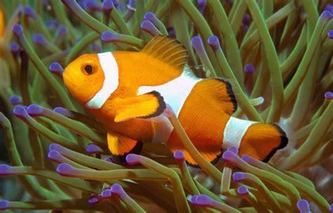 Poisson Exotique Pour Aquarium by Les Poissons Exotiques Peuvent Transmettre Des Maladies 224