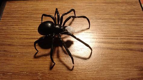 black widow spider instamorph