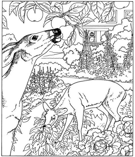 coloring pages for adults nature 109 best images about coloring pages on