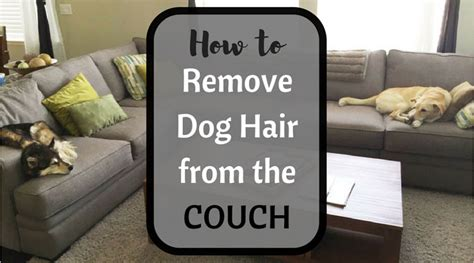 how to remove pet hair from sofa how to remove pet hair from a fabric couch with our best