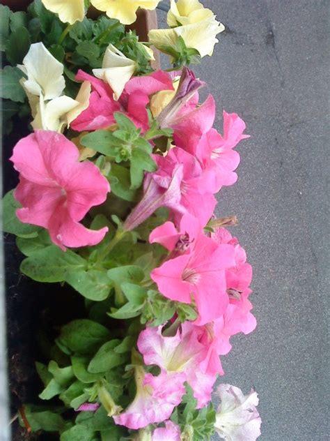 vasi per davanzali imieiappuntiepoi i miei fiori