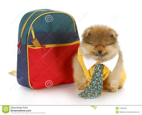 puppy boarding school image gallery puppy school