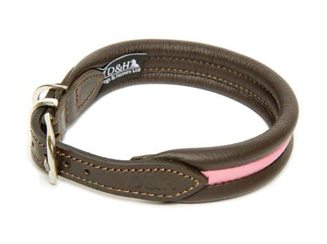 best collars collars for staffies best staffy collars