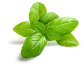 enjoy the taste and health benefits of organic basil