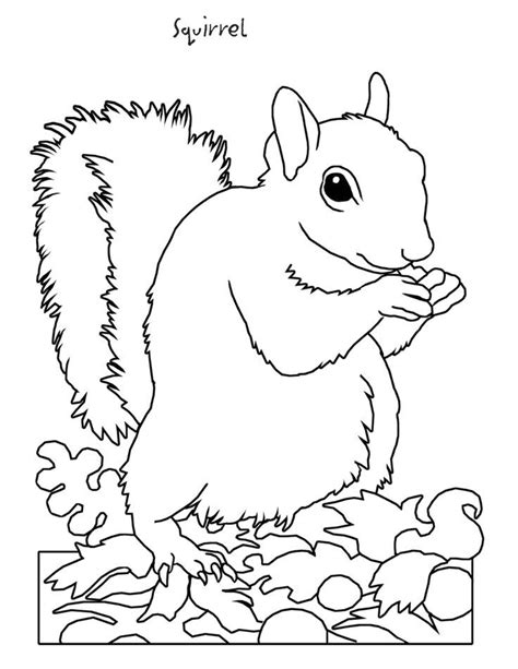 Coloring Pages Animals Hibernating | hibernating animals coloring pages coloring home