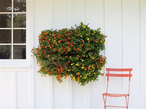 Wall Planters by Living Wall Planter Popsugar Home