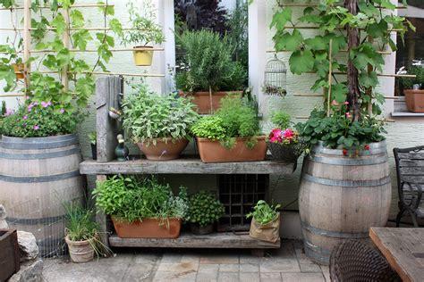 inspiration sichtschutz im topf design ideen terrasse