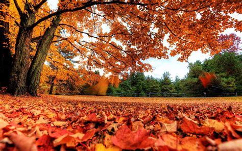 唯美秋季枫树叶图片高清电脑壁纸 第一辑 风景壁纸 壁纸下载 美桌网