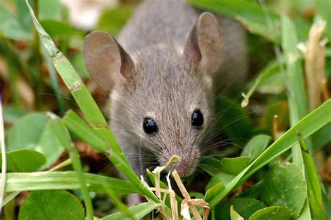 keep mice away from bird feeders