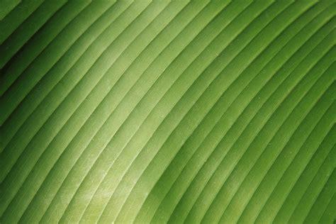 banana wallpaper abstract 3d free images tree nature grass abstract sunlight