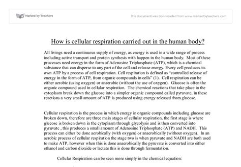 Biology Junction Ap Essays by Ap Biology Essays On Cellular Respiration Gcisdk12 Web Fc2