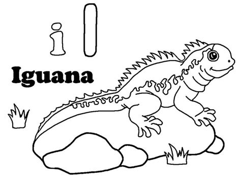 preschool iguana coloring page 16 printable pictures of iguana page print color craft