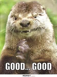 otter memes funny otter pictures memey com