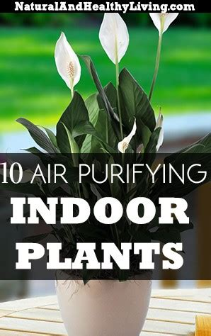 top  air purifying indoor house plants natural