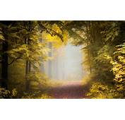 Nature Landscape Fall Path Forest Mist Morning