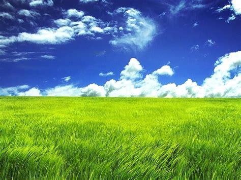 imagenes prados verdes prado verde fondos de pantalla gratis