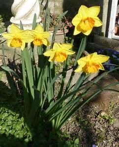 primi fiori di primavera vari hobby primi fiori di primavera