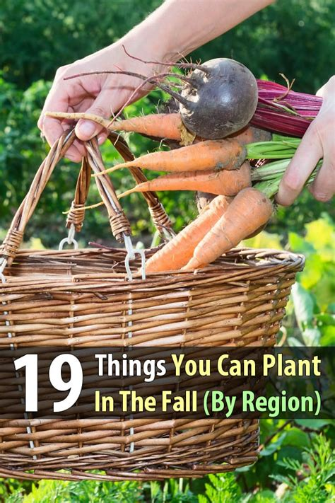 19 things you can plant in the fall by region shtf