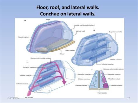 Floor Of The Nasal Cavity by Cranial Base And Nasal Cavity
