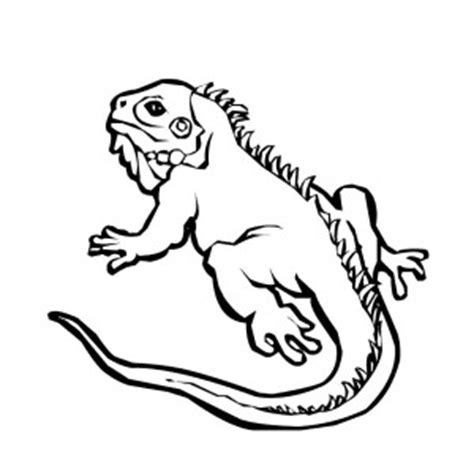 baby iguana coloring page download online coloring pages for free part 136