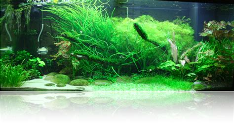 setting aquascape planted aquarium setup ideas