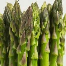 Benih Asparagus Besar cara membuat tanaman hidroponik dengan paralon