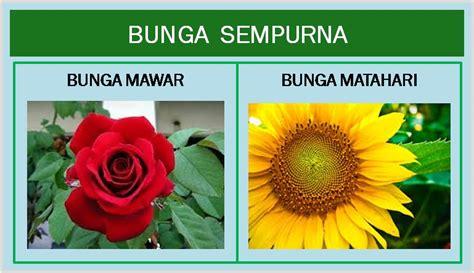 contoh gambar bunga  mudah  digambar contoh waouw