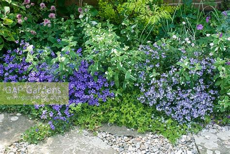 gap gardens border of low growing perennials with