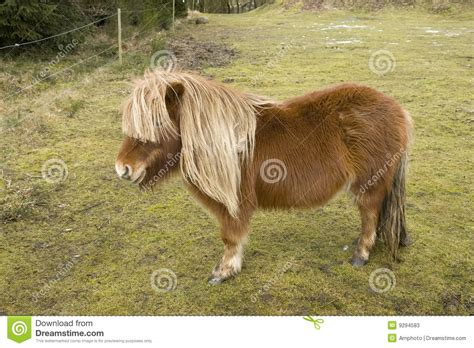 small images small pony stock photos image 9294583