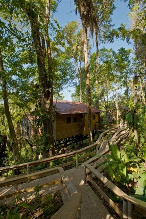 treehouse vacations belize tree houses belize treehouse resorts river view caves branch jungle lodge