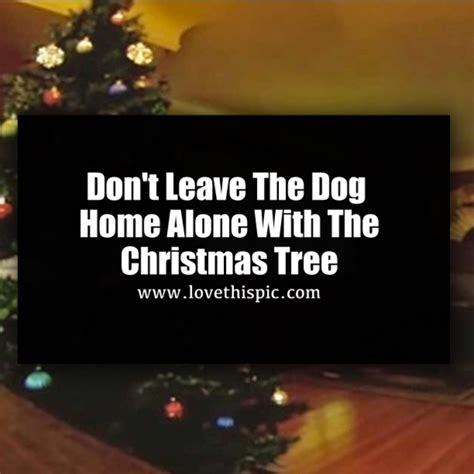 leaving a puppy alone at home for the time don t leave the home alone with the tree