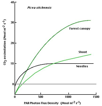 plant growth light intensity photosynthetic environment