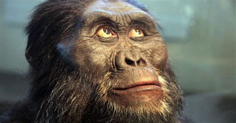missing link the human ape missing link still missing evolution news