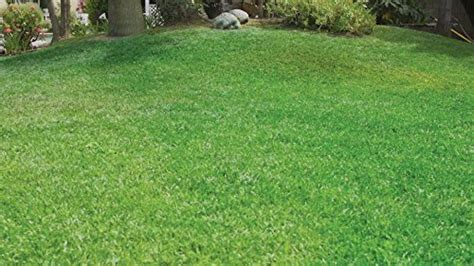 hydro mousse liquid lawn fescue hydroseeding kit covers up to 100 sq ft desertcart