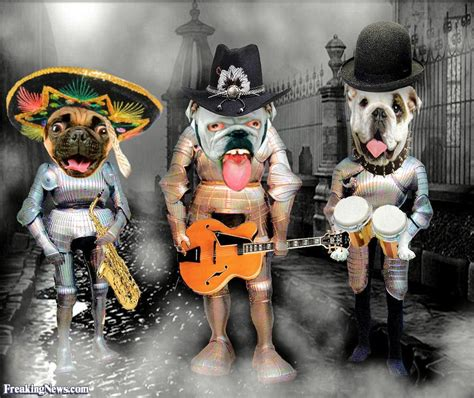 puppy band three band pictures freaking news
