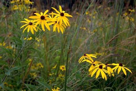 plants in the tropical grassland vvebiomes3 grassland plant