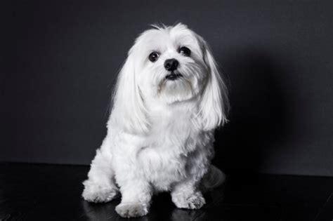 10 best house dogs best house dogs four legged guru