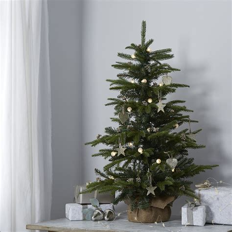 3 ft real tree new house designs