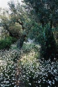 Olive Garden White Marsh by 1000 Images About Gaura Bee Blossoms On