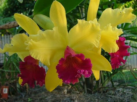 100 facts about orchids 6 incredible flowers that 100 best orchid images on pinterest orchid flowers