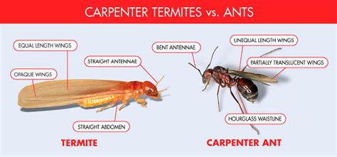 how to get rid of termites with wings in house how to get rid of termites with wings in house house plan 2017
