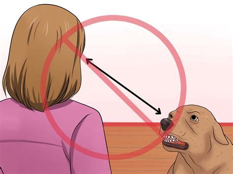 how to make a stop biting veterinarian approved advice on how to make a stop biting
