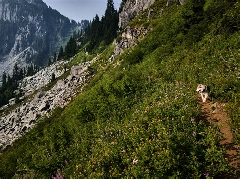 pacific crest trail washington sections section j pacific crest trail wa