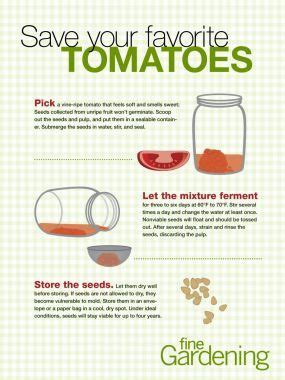Gardening Advice Websites 15 Best Images About Tomato Seeds On